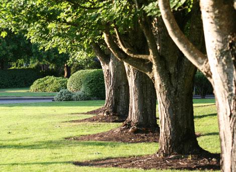 Rowoftrees
