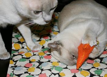 Cats_fish
